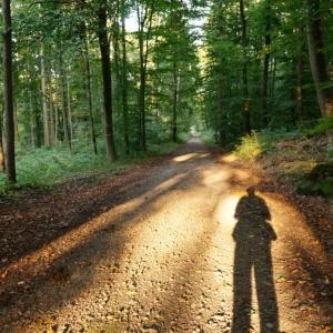 Wald Schatten Sonne